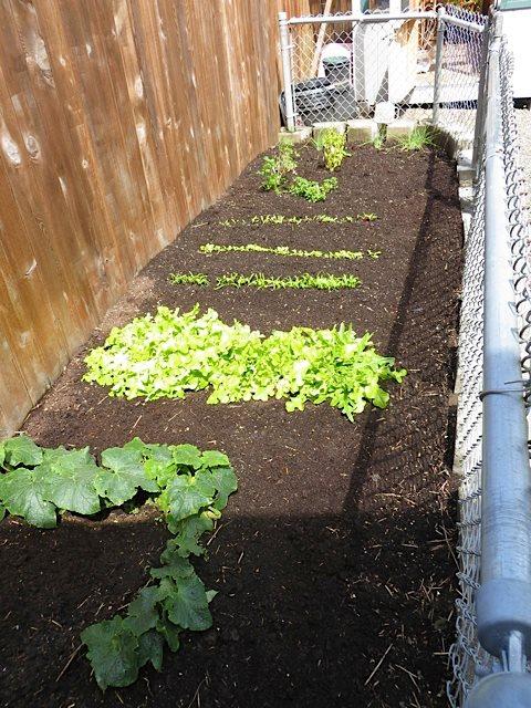 veg garden looking north