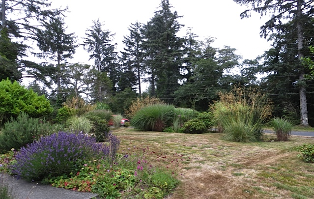 lots of grasses with cotoneasters and a few rhodos