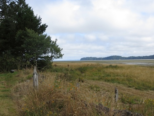Willapa Bay, looking north