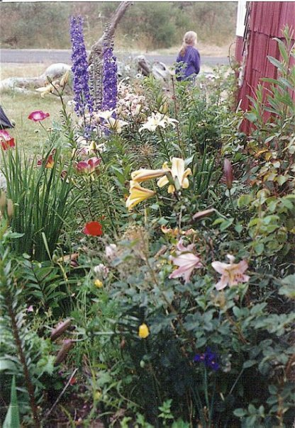 one of my Sou'wester garden beds in 1993