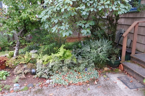 fern collection edged with ajuga
