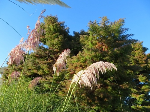 pink pampas plumes at The Anchorage