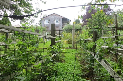 at the bottom of the hill below the fenced veg and berry gardens