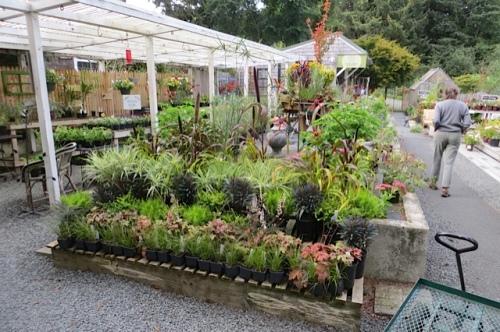plant tables