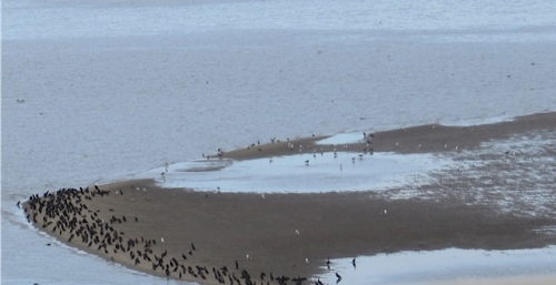 birds on a sand bar