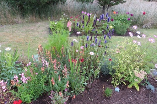 I am so happy with the Boreas gardens this year!