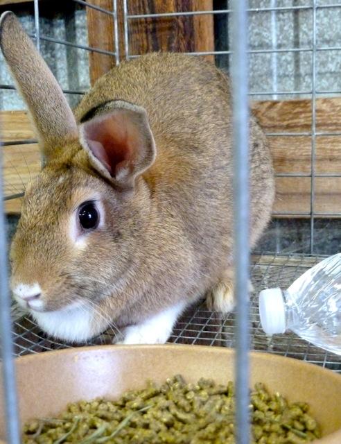 Allan's rabbit photo