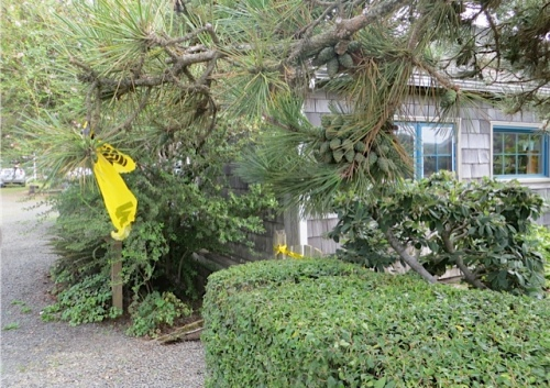 a bit of caution tape on a branch sticking out