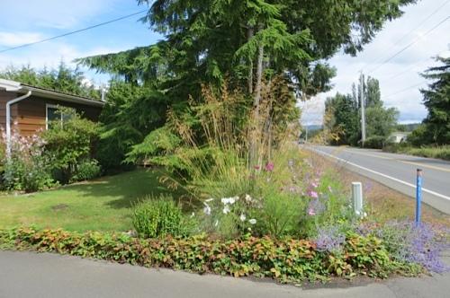 Diane's driveway corner with Stipa gigantea