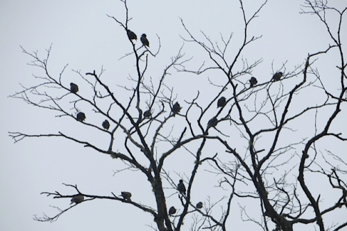 The danger tree is beloved by the birds.