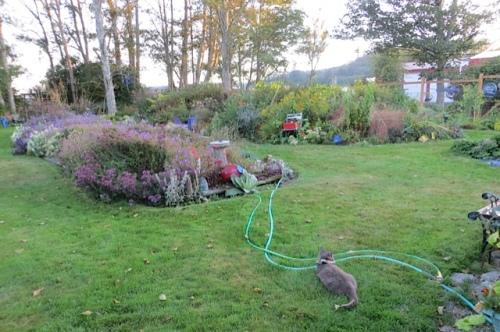 back garden at dusk