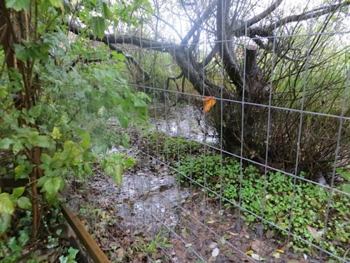 more standing water beyond the deer fence