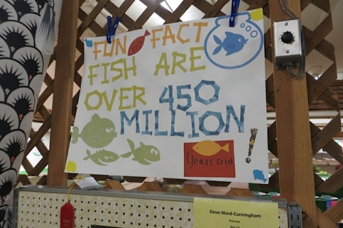 about fish....
