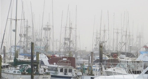on the marina, masts in the fog