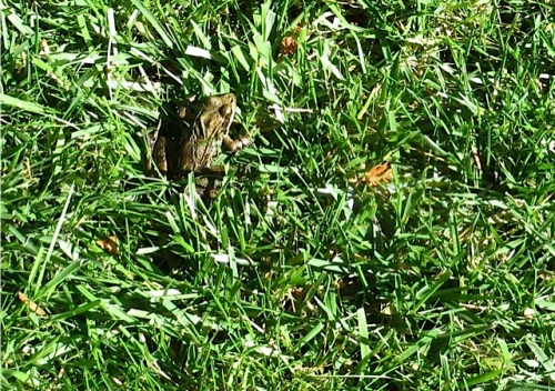 and a wee hopping frog