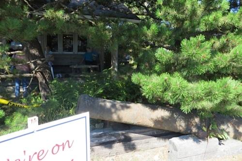 hidden behind the pines