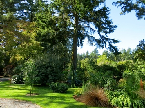 garden beds and specimen trees