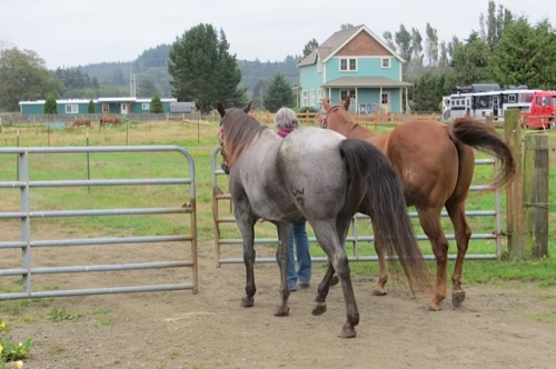 two being led out to pasture