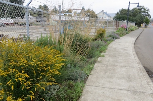 Some dividing and replanting will solve the dullness by next year.