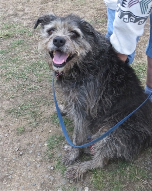 the happy face of staffer Joy's dog