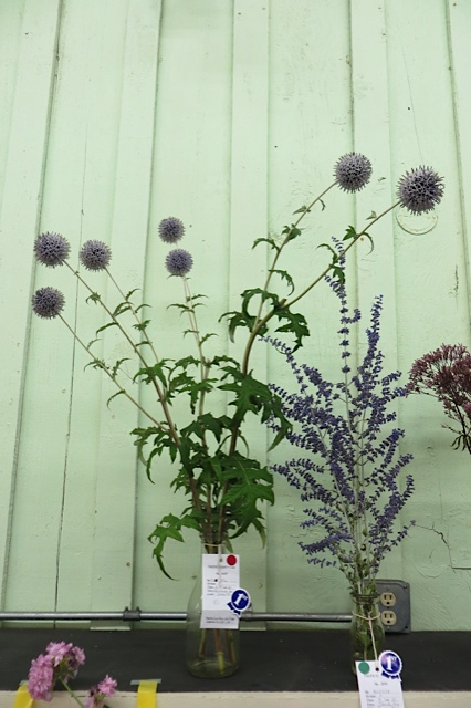 "These were labeled (""blue globe thistle"" and ""Russian sage"") and thus educational as well as attractive"