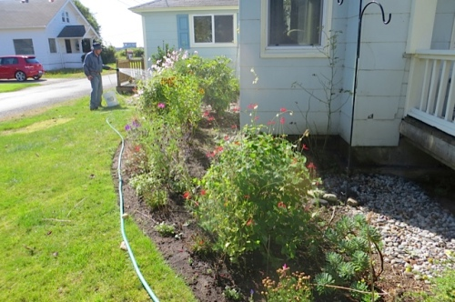 This garden is scheduled sometime soon for a Fall Project mulching so it will hold water better!