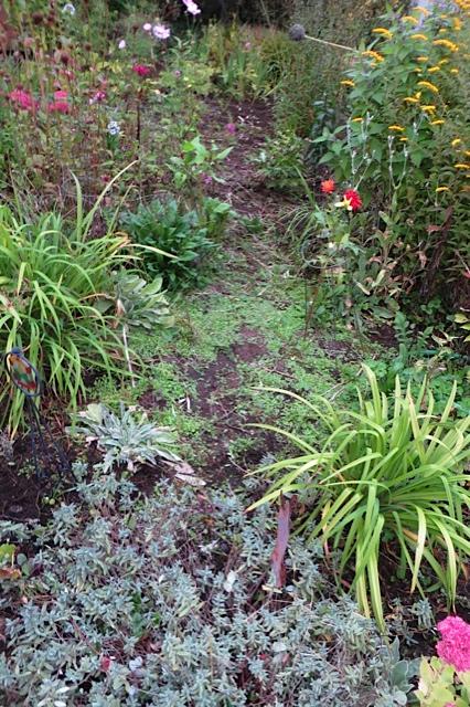 haze of self sown seedlings