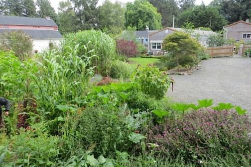 looking back toward the nursery from the verdant back garden