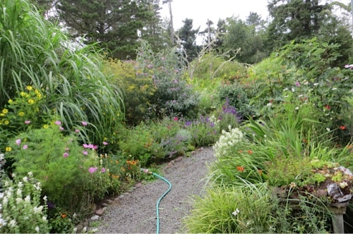 the lushness of Marilyn's garden, looking northwest