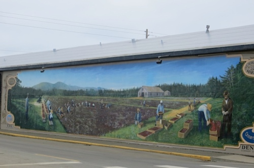 The daphne planter is kitty corner from the cranberry harvest mural on the south wall of Dennis Co.