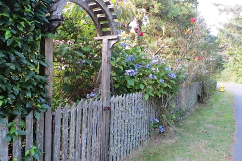 arch and fence with hydrangeas