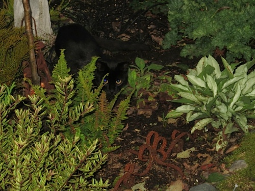 The neighbours' cat, hiding
