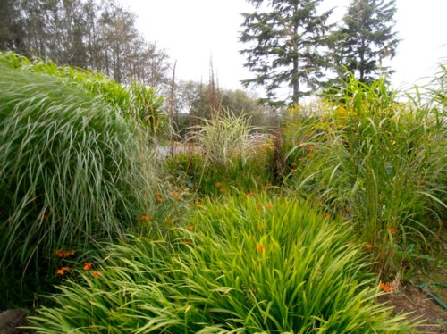 the upper garden being carried by grasses and the montbretia that came in with the soil