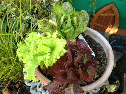 lettuce bowl, given to me by Nancy Allen