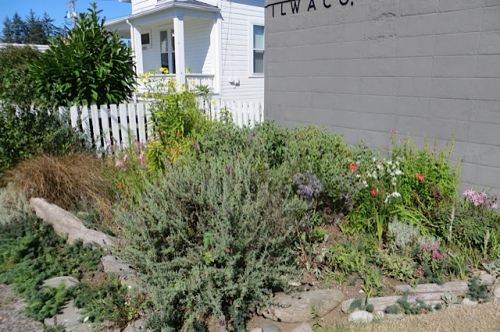 our volunteer garden at the Post Office