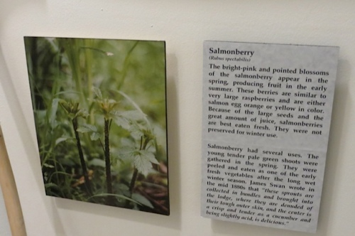 salmonberry facts