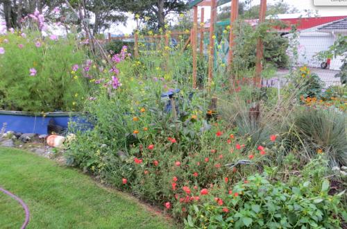 future scree garden?