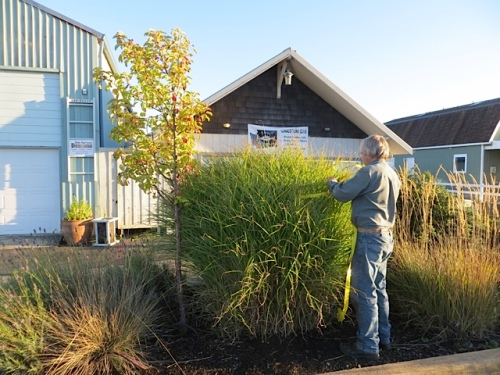 Allan tagging a grass by the Loading Dock Village