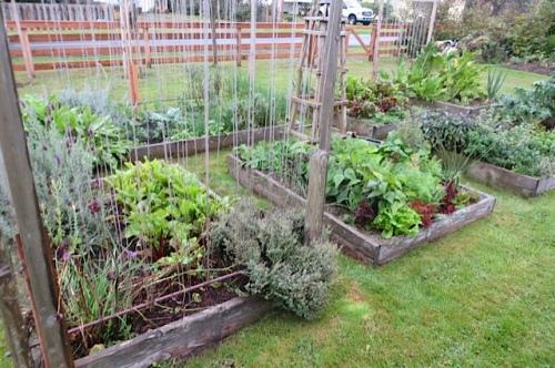 a beautiful vegetable area