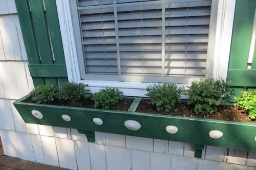 windowbox with sand dollars