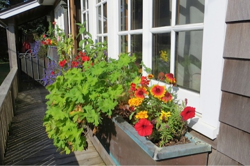 back outside, west window boxes