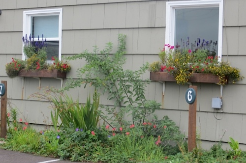 windowboxes still hanging on....but the blue trailing lobelia has petered out.