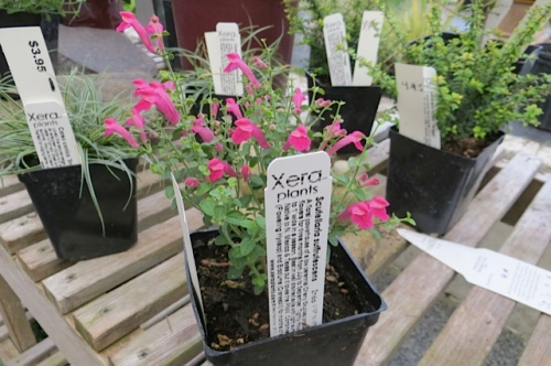 more cool plants from Xera