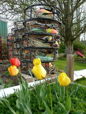 colourful crab pots in spring