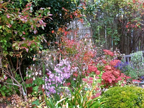 aster, blueberry, Agapanthus seedheads, Sedum 'Autumn Joy'