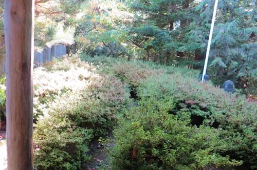 1:24 PM: azalea entry garden