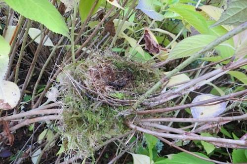 2:04 PM:  Allan found a birdnest
