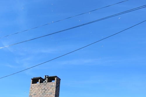 many many gulls in the sky over Nora's house