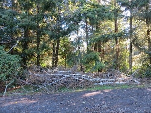 one of several piles of branches