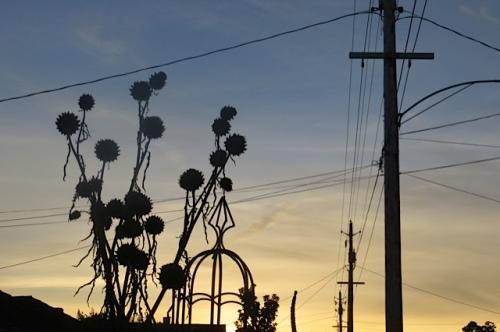 Cardoon against the sunset sky